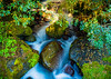 The Stream Running<br /> Fiordland<br /> New Zealand