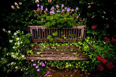A garden in Central Otago.
