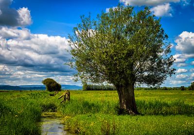 The Willow and The Water Meadow