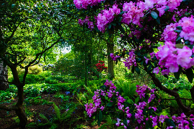 Spring at Kew Garden