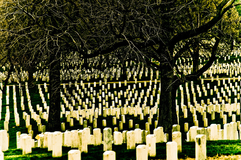 We Will Remember Them (III)<br /> Arlington National Cemetery<br /> <br /> When I visit Arlington in winter I see the gravestones stretching out before me like so many pillars, their white starkness contrasting against the darkness of the trees. May the people we honour under these boughs remember, we will remember them.
