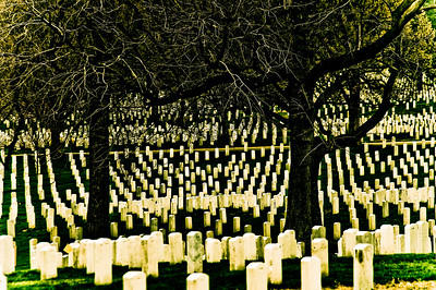 We Will Remember Them (III) Arlington National Cemetery  When I visit Arlington in winter I see the gravestones stretching out before me like so many pillars, their white starkness contrasting against the darkness of the trees. May the people we honour under these boughs remember, we will remember them.