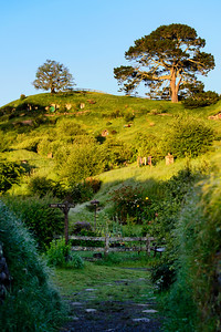 Walking into Hobbiton Movie Set at Sunrise