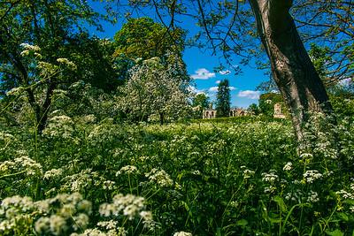 Spring at Glastonbury Abbey