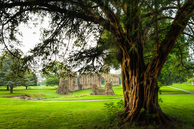 A time to rest and wonder Glastonbury Abbey Somerset England