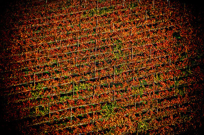 Pinot Bald Hills Vineyard Central Otago