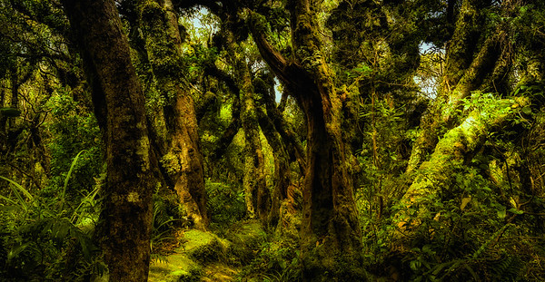 Lost in Mirkwood