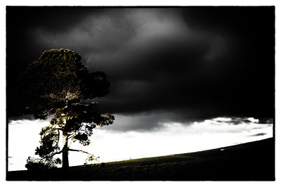 Speaking of Trees.....