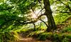An Exmoor Path