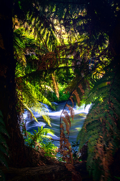 An Outpouring of Tears<br /> <br /> On this eve of ANZAC Day, we honour the fallen,<br /> as the flowing stream shows our lives uninterrupted, and the green reflects our lifeblood,<br /> May those fronds that never fall remind us<br /> of those who gave your tomorrow for their today.