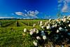 Vines & Roses<br /> Renwick
