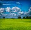 Somerset Summer Colour