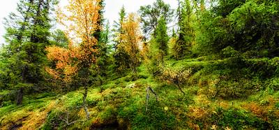 Memories of Norway in Autumn