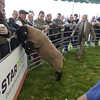 175th Kelso Ram Sales