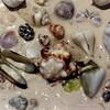 Shells on the beach at Jambiani, Zanzibar