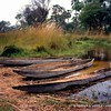Mekoro (dugout canoes) in the Okavango Delta, Botswana