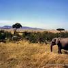 Elephant in the Masai Mara National Reserve, Kenya