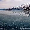 Floating chunks of ice, Glacier Bay National Park, Alaska