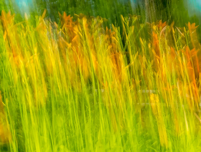 Movement-Grass