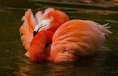 """Flamingo at Rest"""