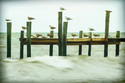 Gulls in the Breeze
