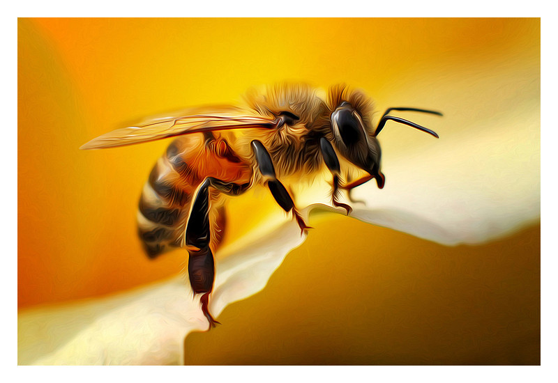 """Honey Bee on Yellow Rose""<br /> (Multiple award winning image.)"
