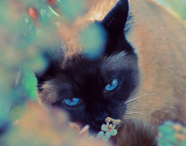 """Autumn Sniffing Flowers"" Autumn's beautiful blue eyes make her a natural for the camera."