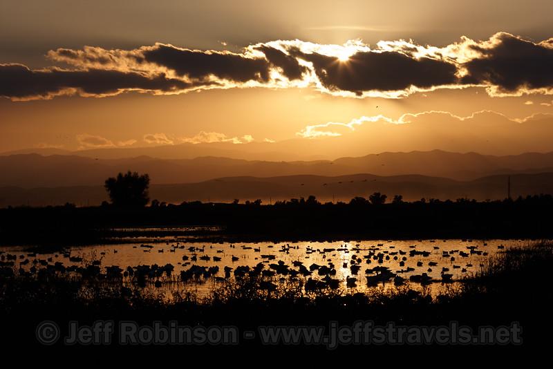 (11/10/2012, Sacramento National Wildlife Refuge)