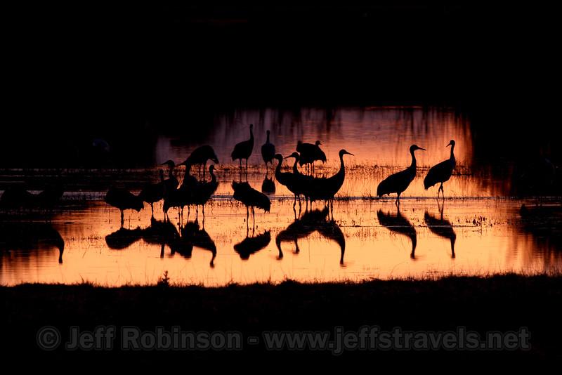 A flock of sandhill cranes in a pool reflecting sunset colors (10/4/2009, Isenberg Sandhill Crane Reserve near Lodi, CA)