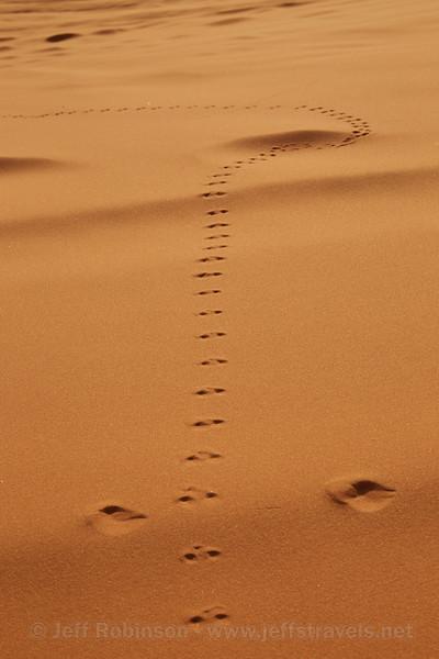 (9/6/2013, Coral Pink Sand Dunes SP, 2013 Utah)<br /> EF24-105mm f/4L IS USM @ 75mm f/16 1/160s ISO500