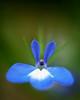 Saphire Blue