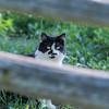 Professional pet photography © Lindy Martin