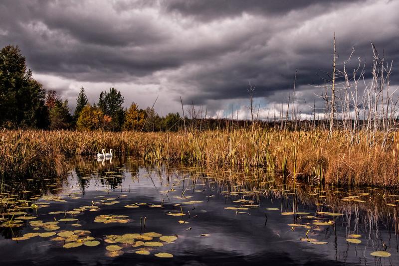 Tempest On Swan Lake