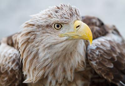 -Birds-