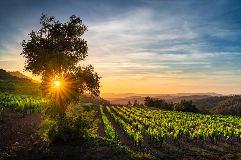 Vinyes Doménech, El Priorato