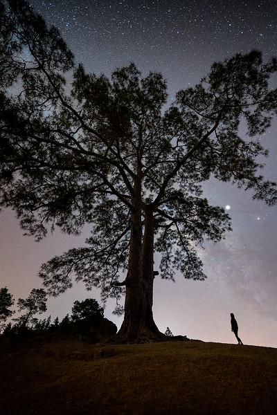 Árbol de Casandra