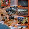 Gintografia para promoción de la isla de La Palma
