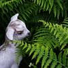 Cabra Palmera