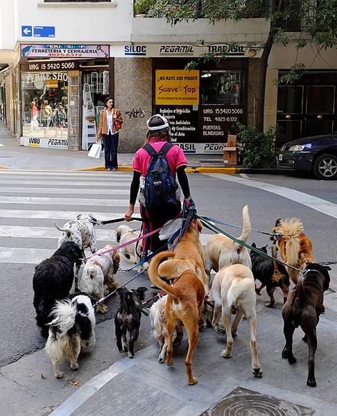 Pasea Perros, Buenos Aires. Argentina