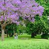 Bosques de Palermo, El Rosedal, Buenos Aires. Argentina