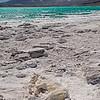 Puma momificado, Laguna Verde, Catamarca, Altiplano Andino. Argentina