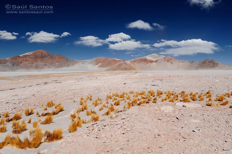 Altiplano Andino, Catamarca, Argentina.