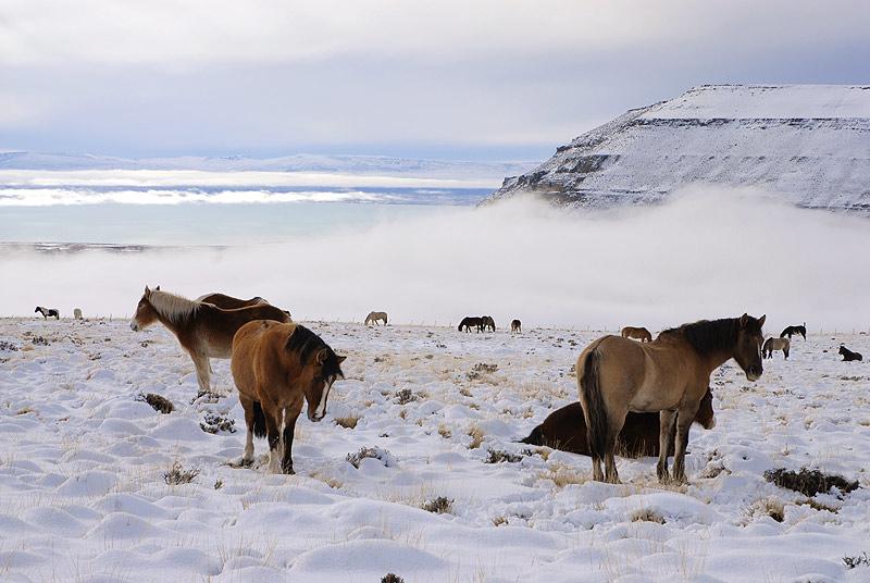 Cerro Frias en Invierno, Calafate, Parque Nacional de Los Glaciares. Pagagonia Argentina
