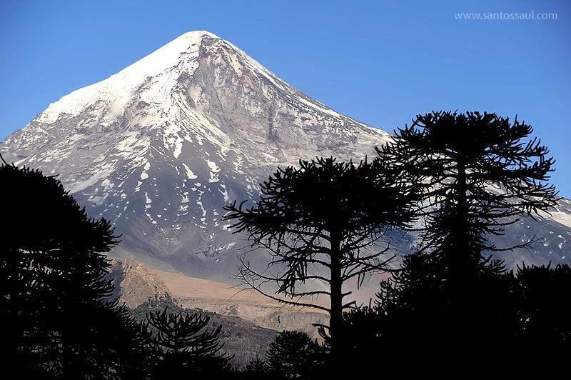 Araucarias y Volcan Lanin, Neuquen,Region de Los Lagos. Patagonia Argentina