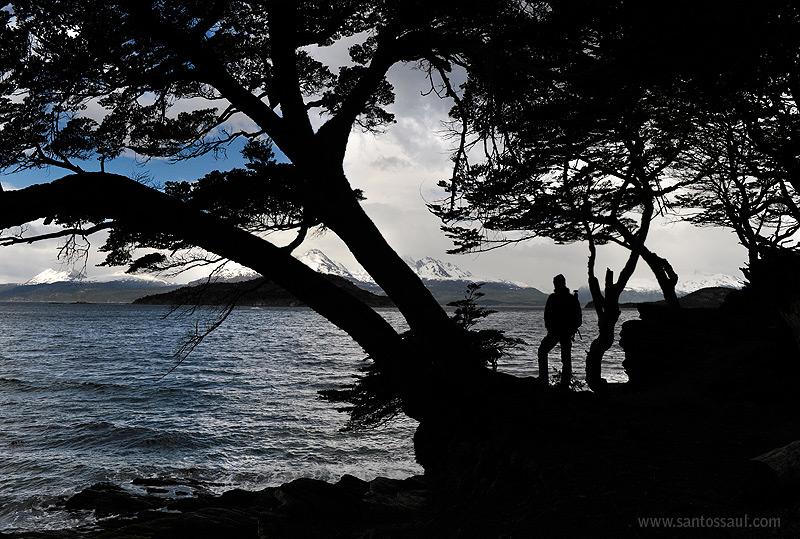 Parque Nacional Tierra del Fuego, Ushuaia, Tierra del Fuego, Patagonia. Argentina