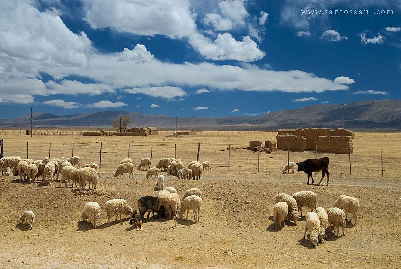 Altiplano Andino