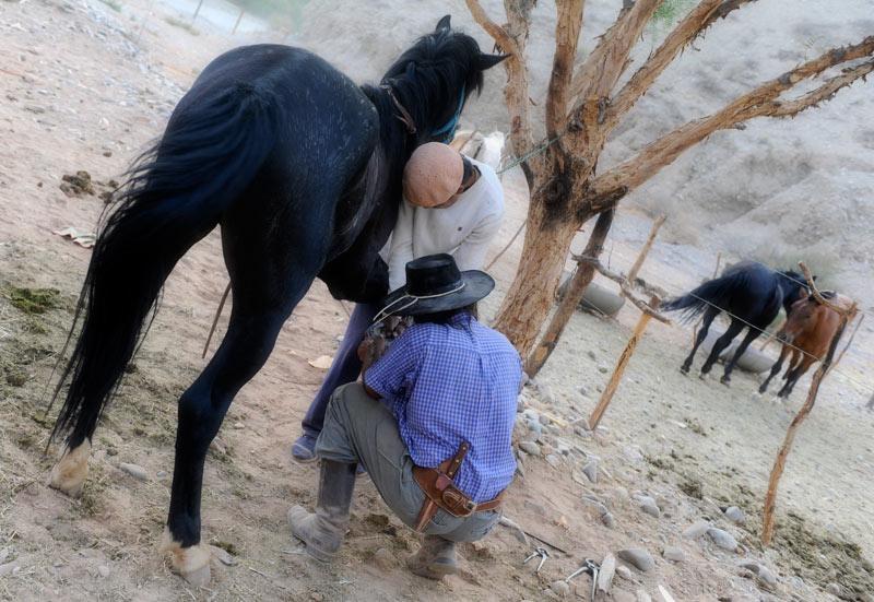 Gauchos herrando los caballos, Salta, Argentina