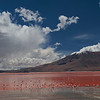 Laguna Colorada, Reserva Natural Eduardo Avaroa, Bolivia