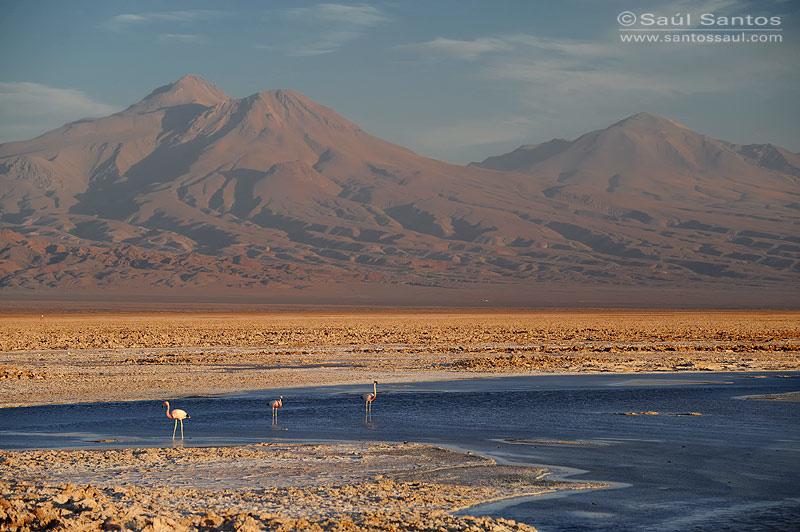 Salar de Atacama, Desierto de Atacama