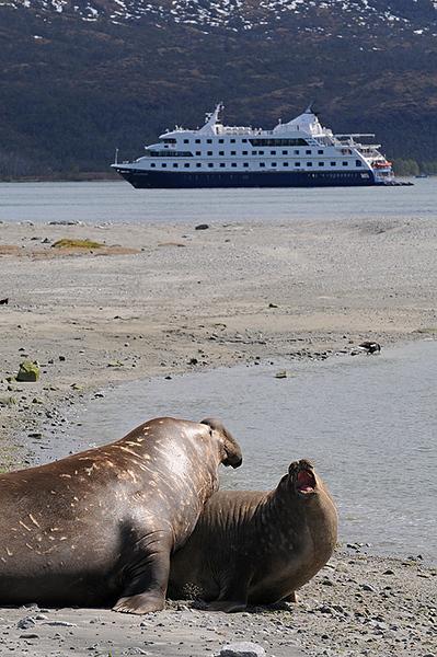 Elefantes marinos, Mar Australis, Tierra del Fuego, Patagonia Chilena.